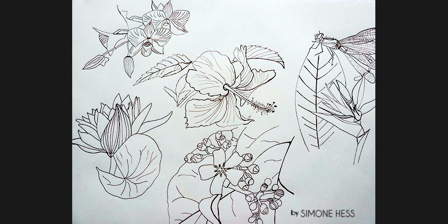 Pflanzenstudie - Tintenzeichnung