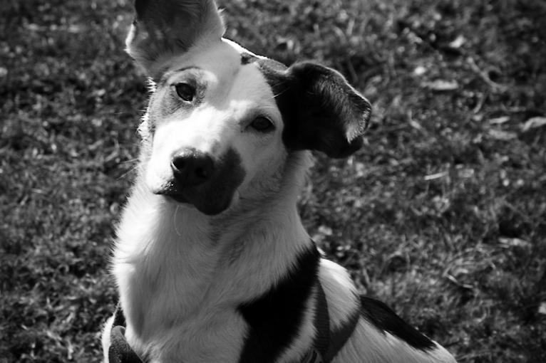 Ungarischer Straßenhund  - Lotte