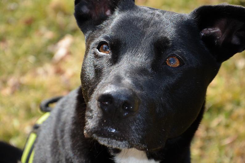 Mischlingshund - Raudi